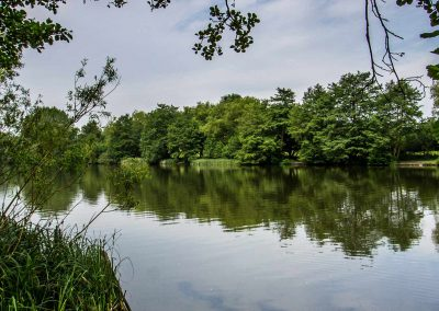 Weald Country Park | Brentwood