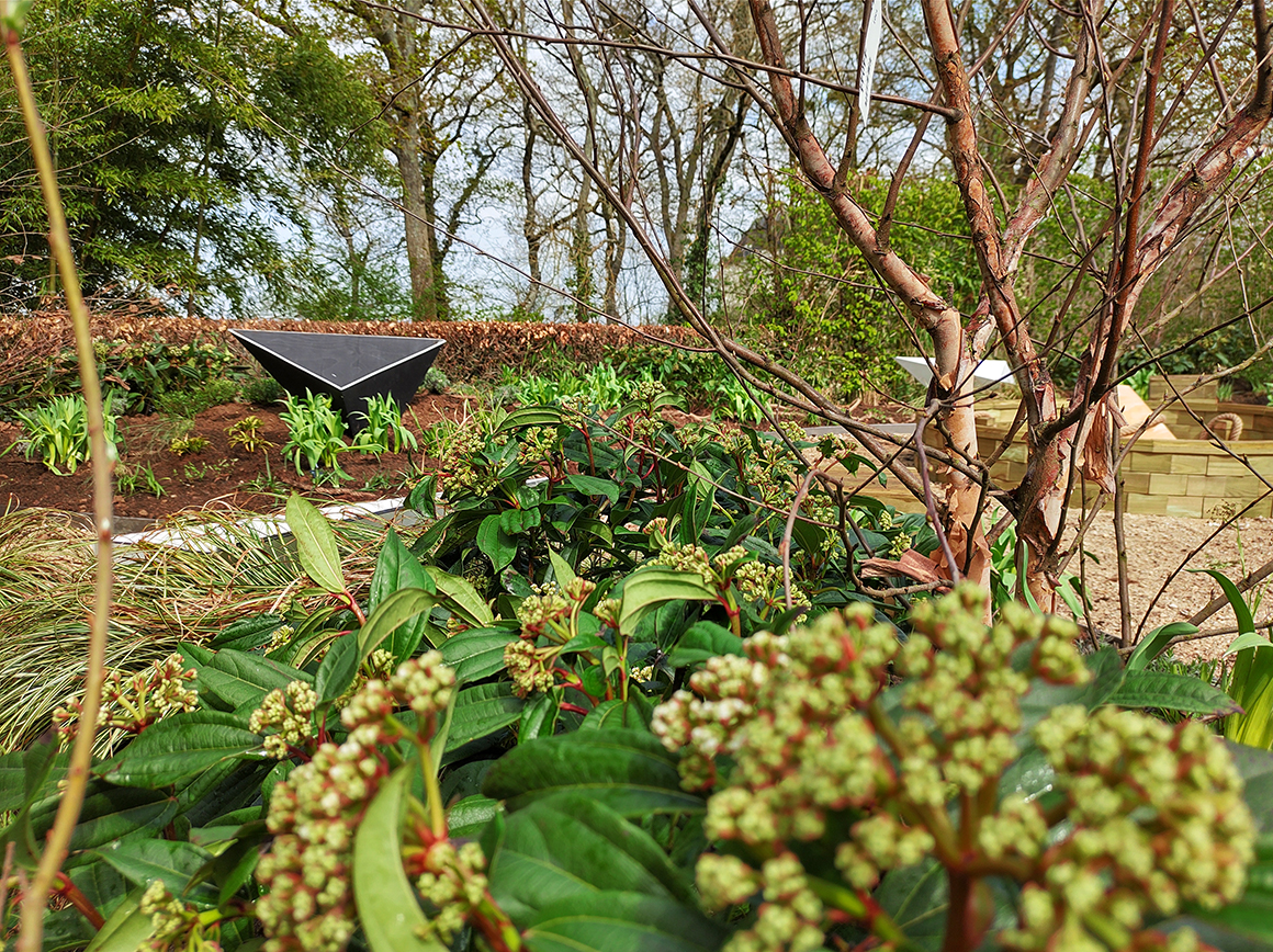 garden view through plants